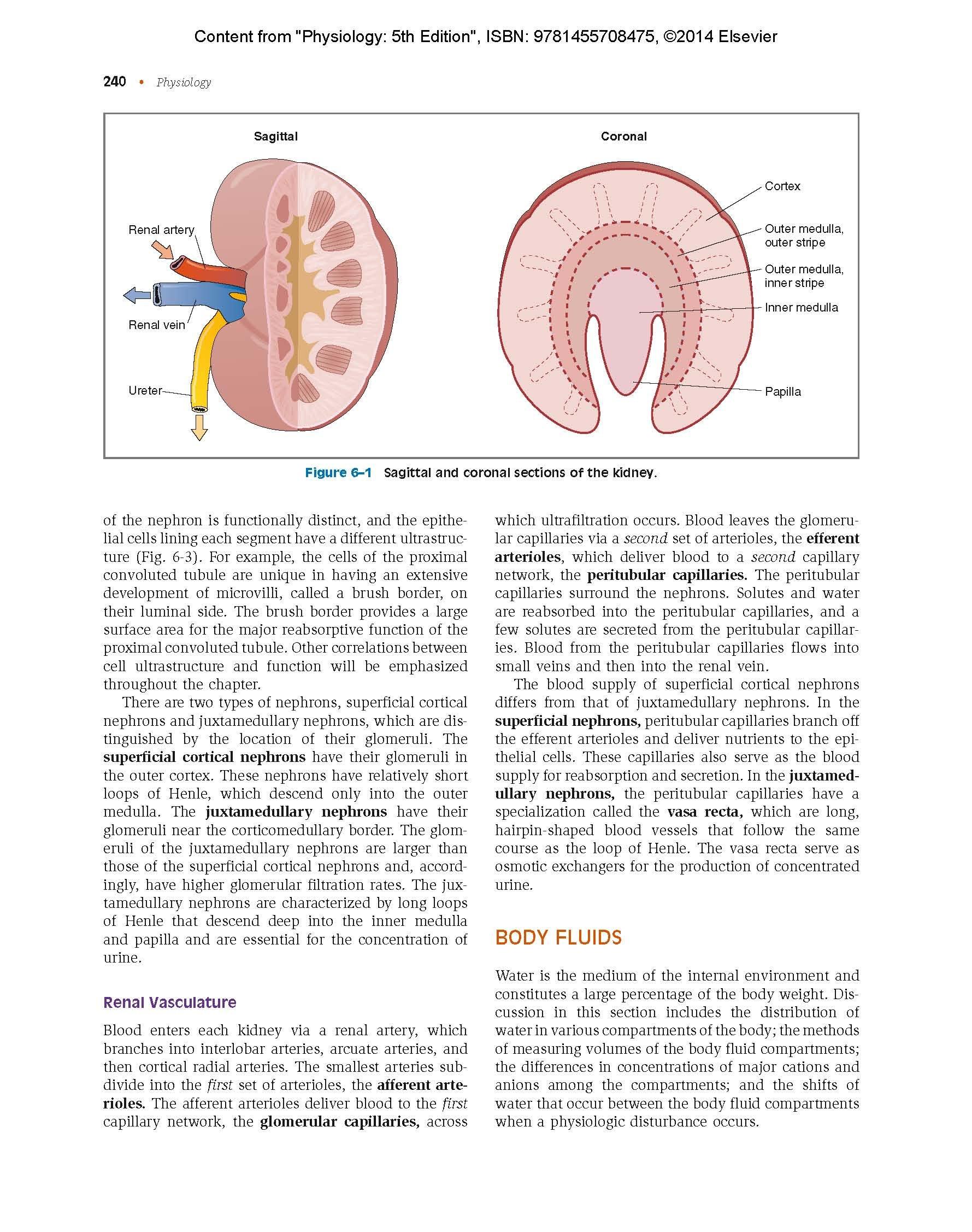 Edition physiology 5th pdf costanzo linda