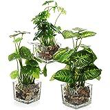 MyGift Conjunto de 3 Plantas Artificiales, vegetación de Mesa Falsa con macetas de Vidrio Transparente