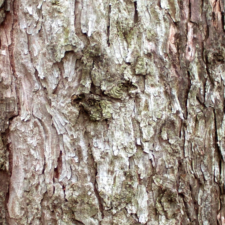 Apalis Apalis Apalis Klebefolie Holzoptik - Baumrinde - Dekorfolie Holz, Größe HxB  250cm x 100cm 0992c6