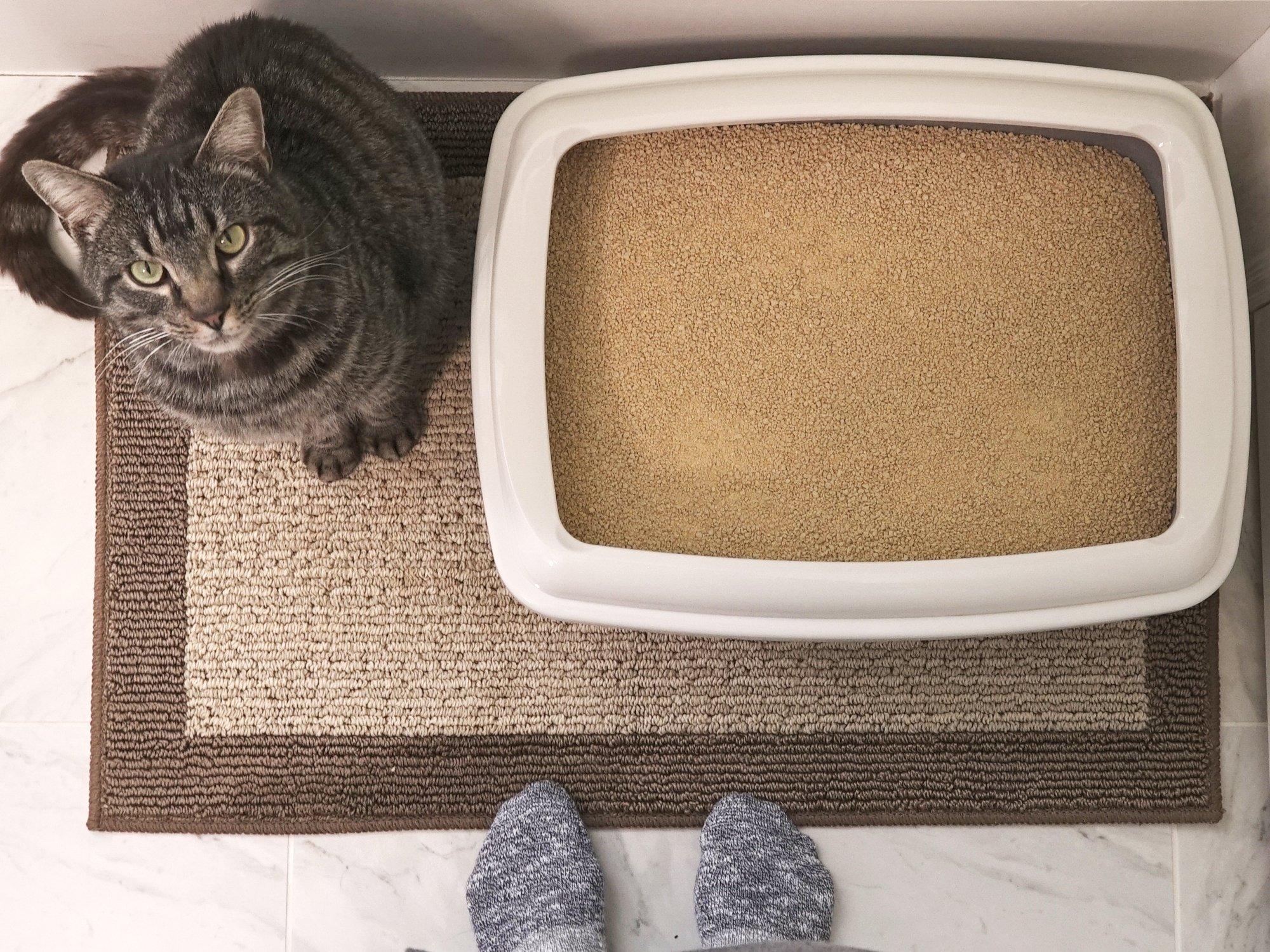World's Best Cat Litter, Scented Clumping Litter Formula for Multiple Cats, 28-Pounds by World's Best Cat Litter