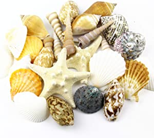 """CYS EXCEL Approx 30 sea Shells with Starfish, Sized at 2"""" to 4"""", Mixed Beach Seashells, Arious Sizes Natural Seashells for Fish Tank, Vase Filler Sea Shells, Home Decorations, Wedding Décor"""