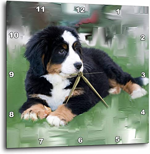 3dRose DPP_4038_2 Bernese Mountain Dog Wall Clock, 13 by 13-Inch