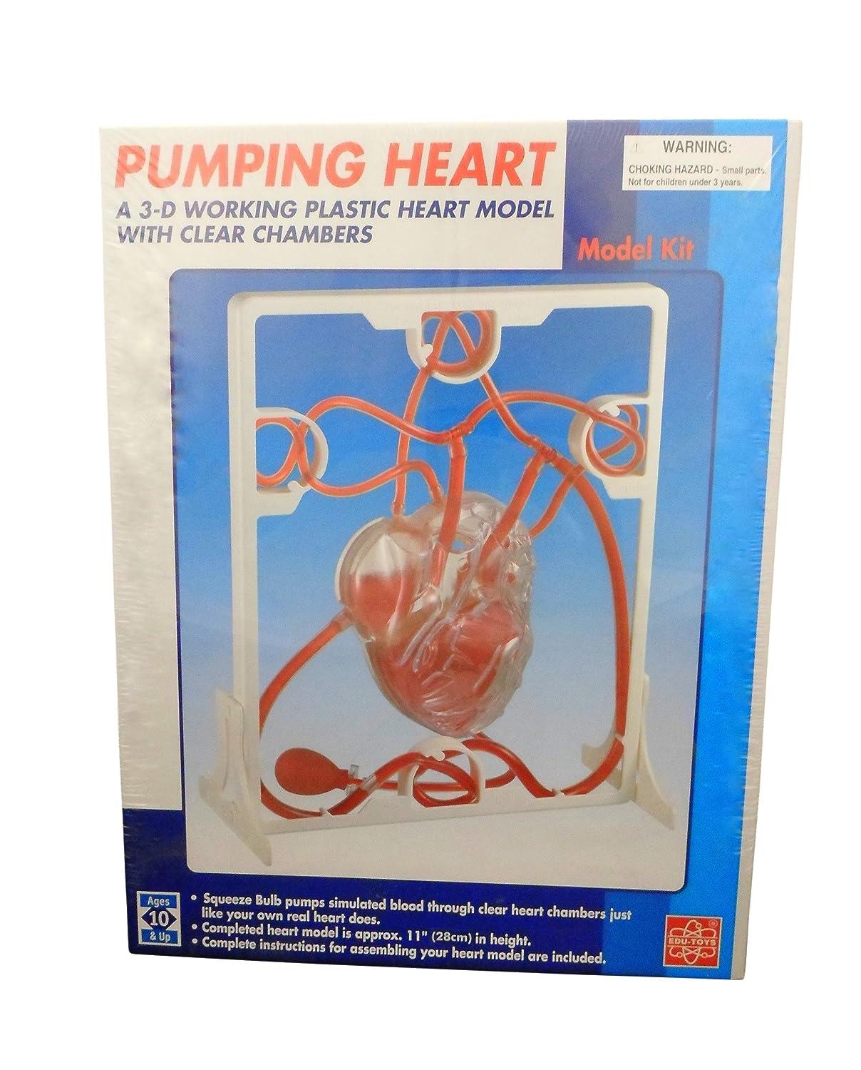 Ajax Scientific AN090-0000 Three-Dimensional Plastic Pumping Heart Model Kit, 11' Height