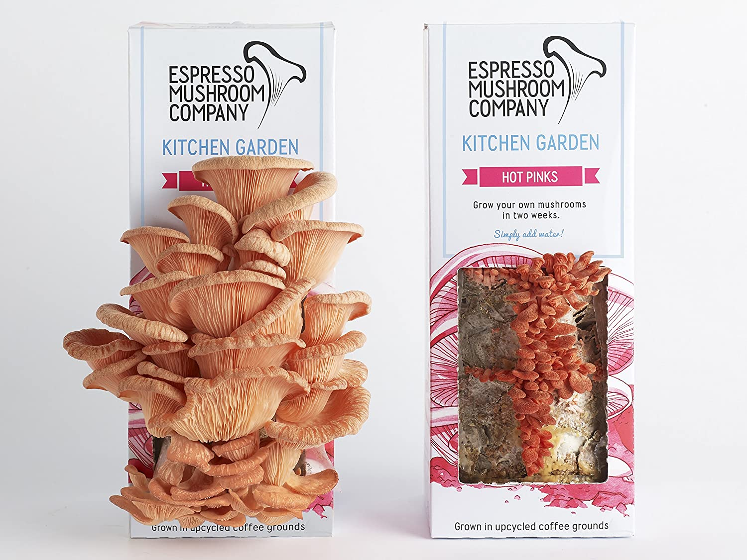 Kitchen Garden Mushrooms Hot Pink Kitchen Garden Grow Your Own Oyster Mushroom Kit Amazon