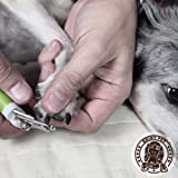 Dog Nail Clippers with Quick Sensor to Avoid
