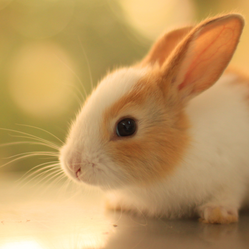 cute-bunny-rabbit-live-wallpapers
