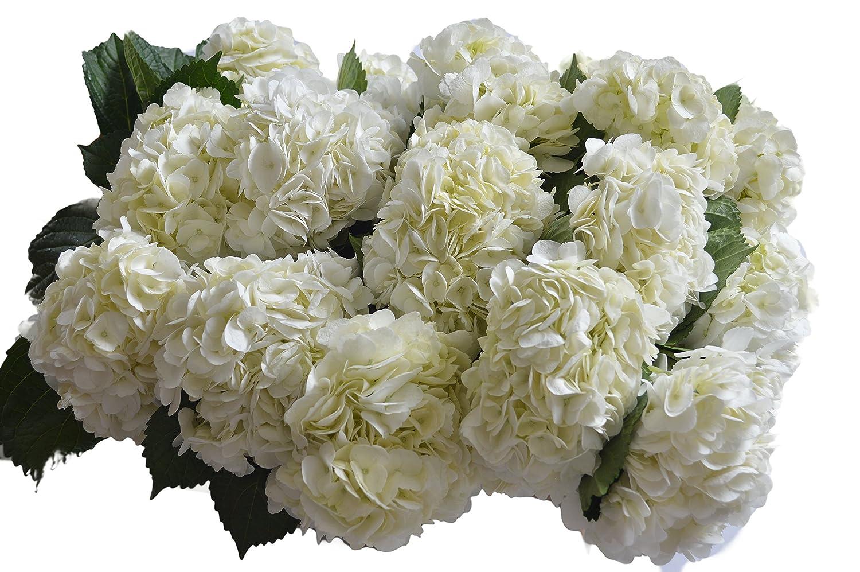 Amazon Farm2door Farm Fresh Hydrangeas 15 Fresh White