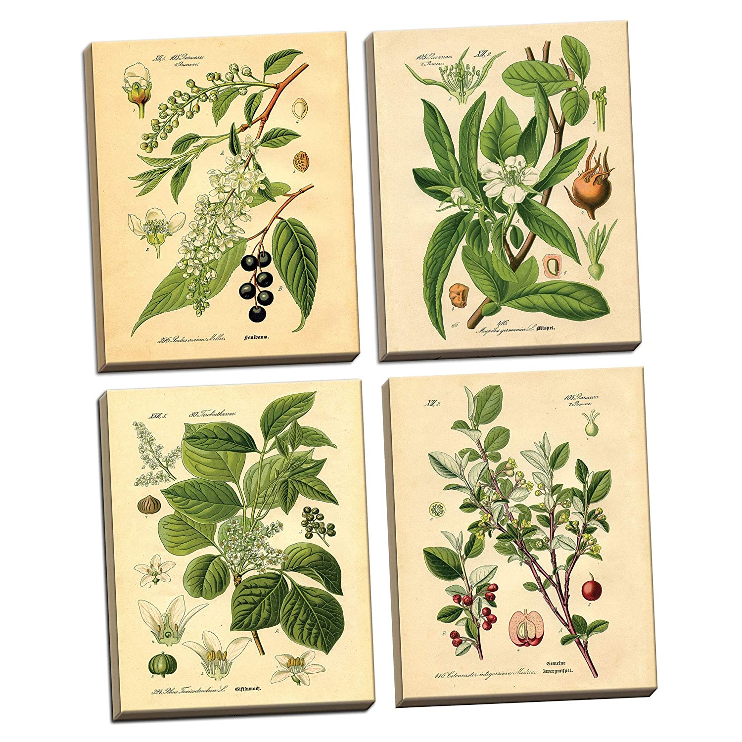 Gango Home Decor Popular Old-Fashioned Plant Botanical Prints; Four 8x10-Inch Hand-Stretched Canvases; Ready to Hang!