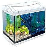 Tetra AquaArt Discovery Line LED Aquarium-Komplett-Set weiß (inklusive LED-Beleuchtung, Tag- und Nachtlichtschaltung, Innenfilter und Aquarienpumpe, ideal für Garnelen)