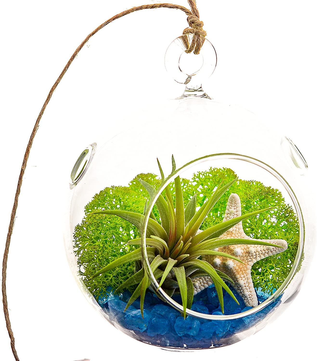 Amazon Com Air Plant Terrarium With Blue Rocks Moss And Starfish