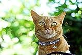 NFL CAT COLLAR. - SEATTLE SEAHAWKS CAT