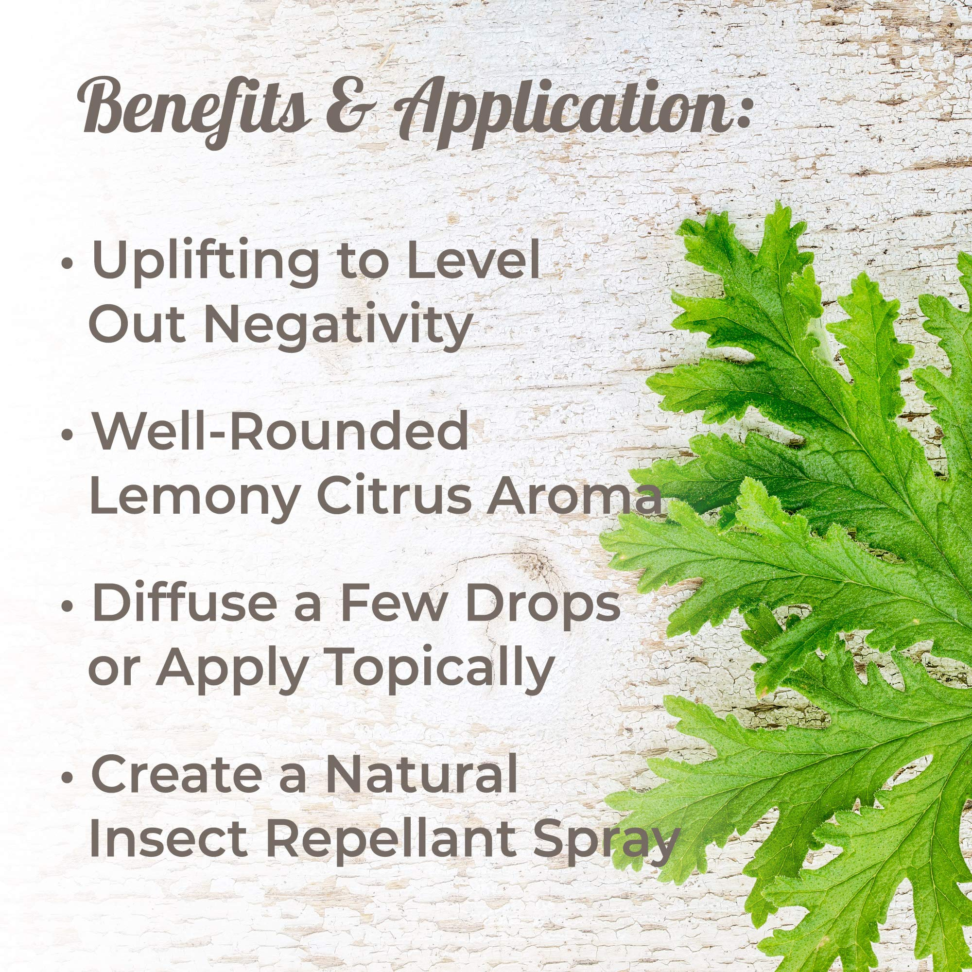 Plant Therapy Citronella Organic Essential Oil   100% Pure, USDA Certified Organic, Undiluted, Natural Aromatherapy, Therapeutic Grade   100 Milliliter (3.3 Ounce) by Plant Therapy (Image #2)