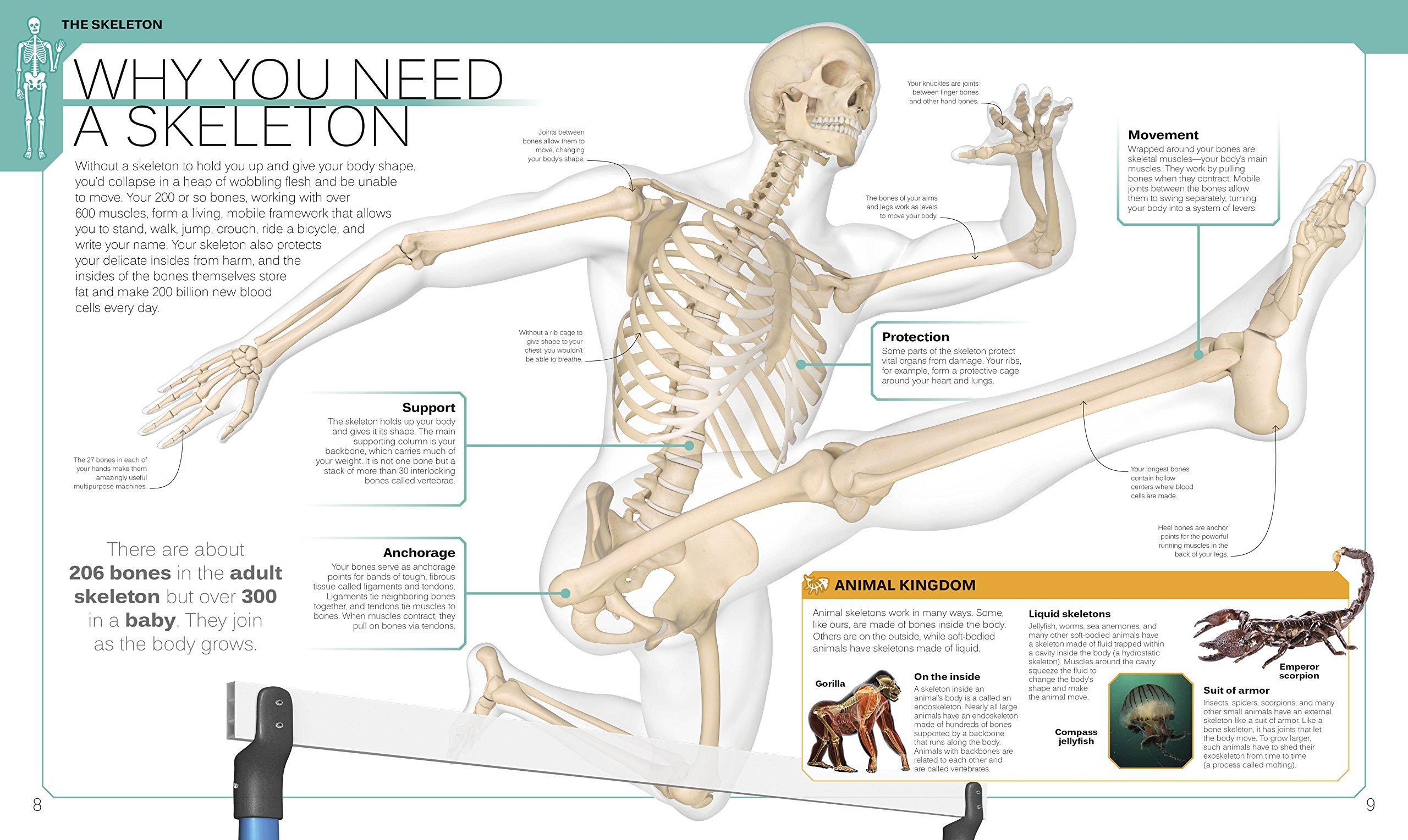 The Skeleton Book Robert Winston 9781465453365 Amazon Books