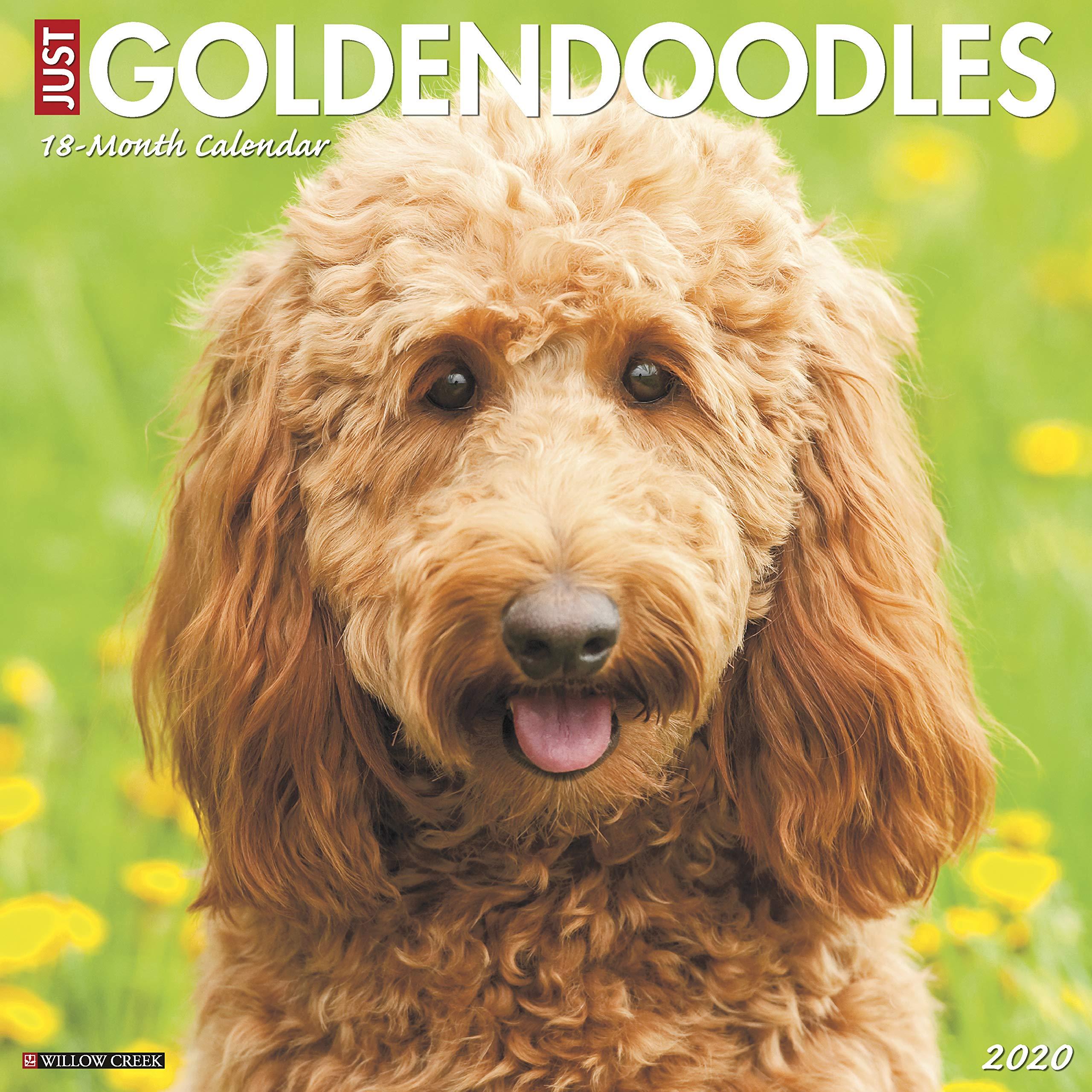 Just Goldendoodles 2020 Wall Calendar (Dog Breed Calendar