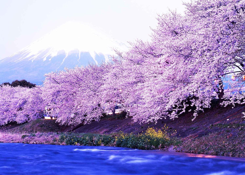 LYLYCTY 7x5ft Cherry Blossom Backdrop Romantic Cherry Blossom Photography Backdrop Photo Studio Background Props LYP080