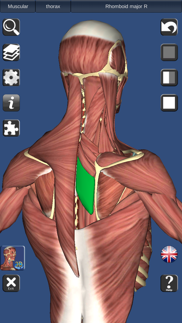 Colorful Anatomy And Physiology Revealed 3.0 Promo Code ...
