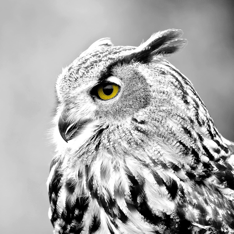 Artis Owl Canvas Multi-Coloured, Multicoloured, 45 x 45 x 3,3 cm Ceanothe 608046