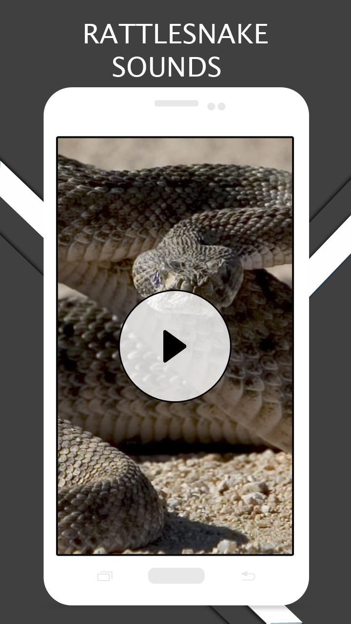 Rattlesnake Sounds And Ringtones: Amazon com au: Appstore