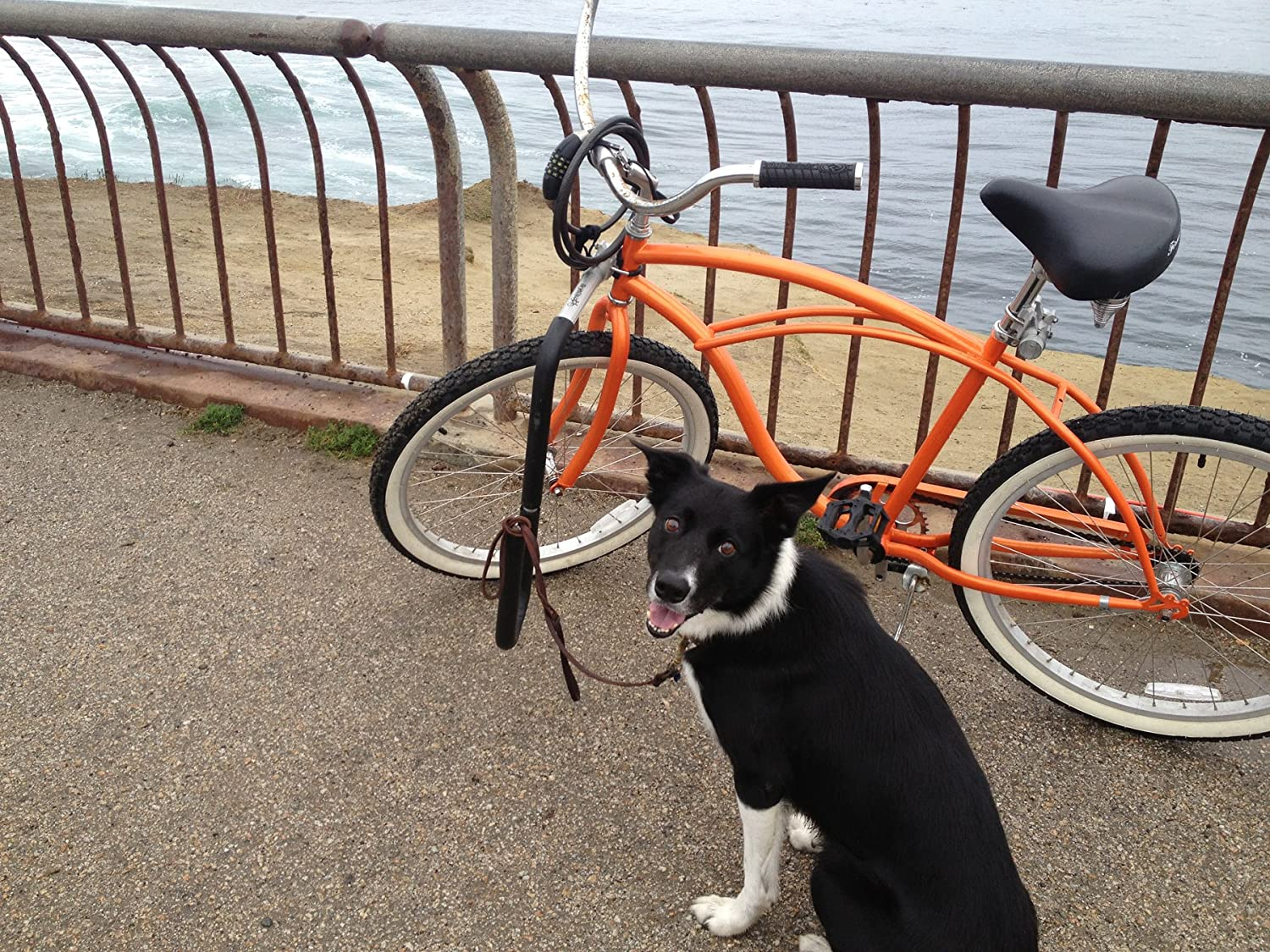 Mbb Bicycle Dog Runner By Moved By Bikes