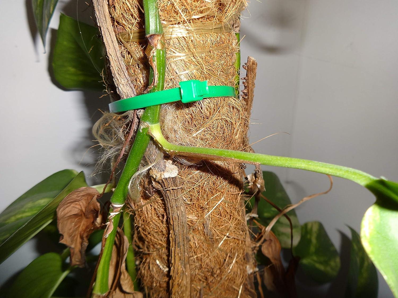 resistente ai raggi UV alta qualit/à 200 mm di lunghezza x 36 mm Fascetta per piante in plastica O/&W Security 220