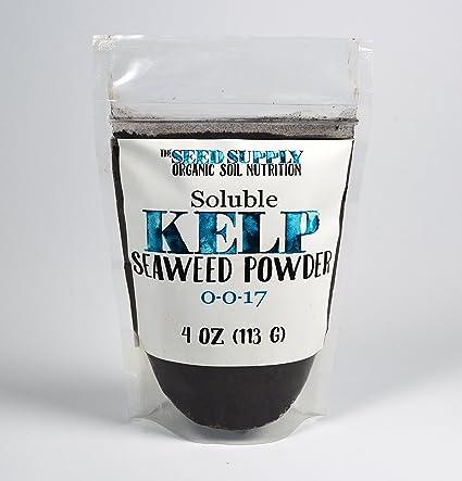 Amazon.com: soluble Planta de algas kelp – 4 onzas de polvo ...