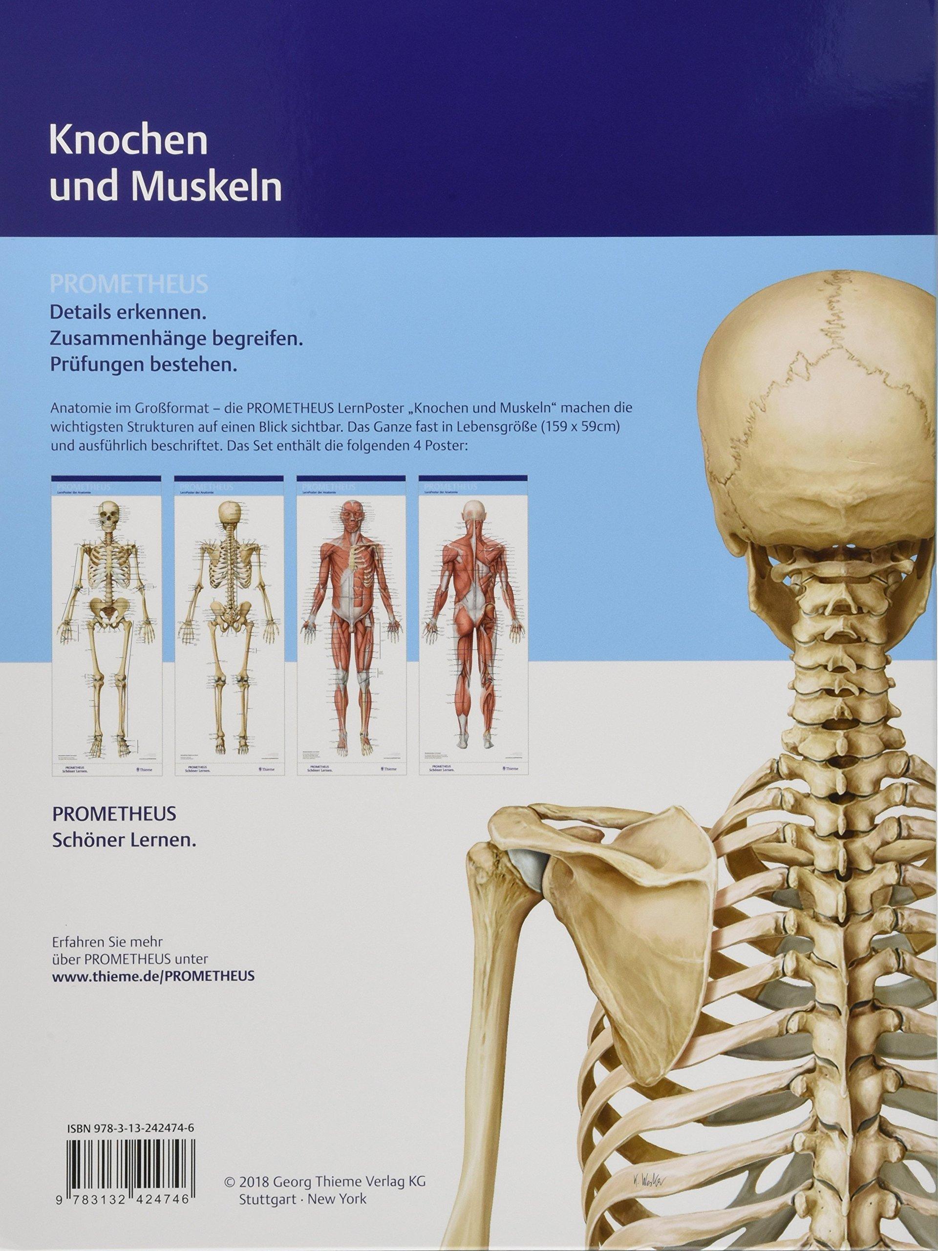 Wunderbar Muskelanatomie Plakat Bilder - Anatomie Von Menschlichen ...