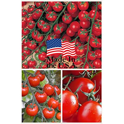 Sweet Million Cherry Tomato (Organic) Tomato 150 Seeds Upc 643451295290 : Garden & Outdoor