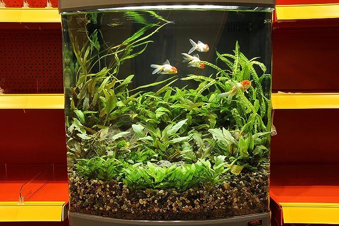 Sera 31152 Mondi Biotop LED Cube 130 XXL un 130 L Agua Dulce de Acuario Completo con iluminación LED y Filtración.: Amazon.es: Productos para mascotas