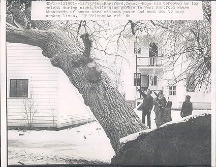Amazon com: 1956 Hartford Conn Huge Elm Tree Homes Power