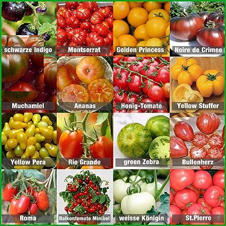 Samen Set/_/_ 10 Spezialitäten Sorten Tomatensamen