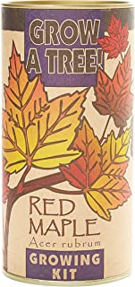 product image for Red Maple   Tree Seed Grow Kit   The Jonsteen Company