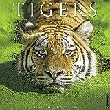 Tigers 2018 Wall Calendar