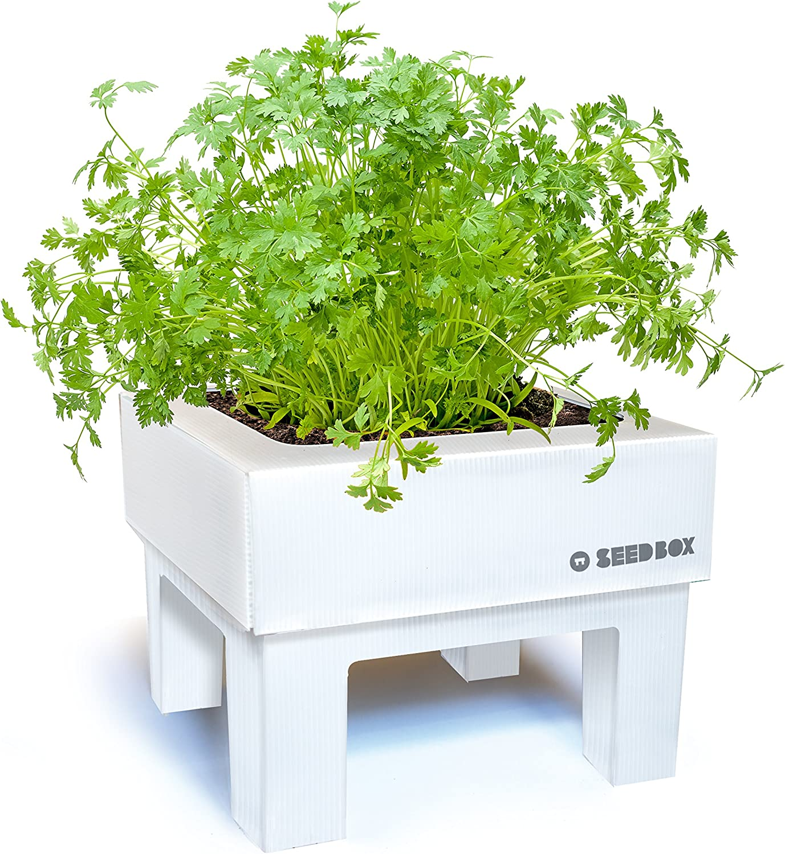 SeedBox SBMCUAL Huerto urbano Cultívame mini - albahaca, 17x4x17 ...