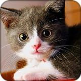 Schönen Katzen Thema