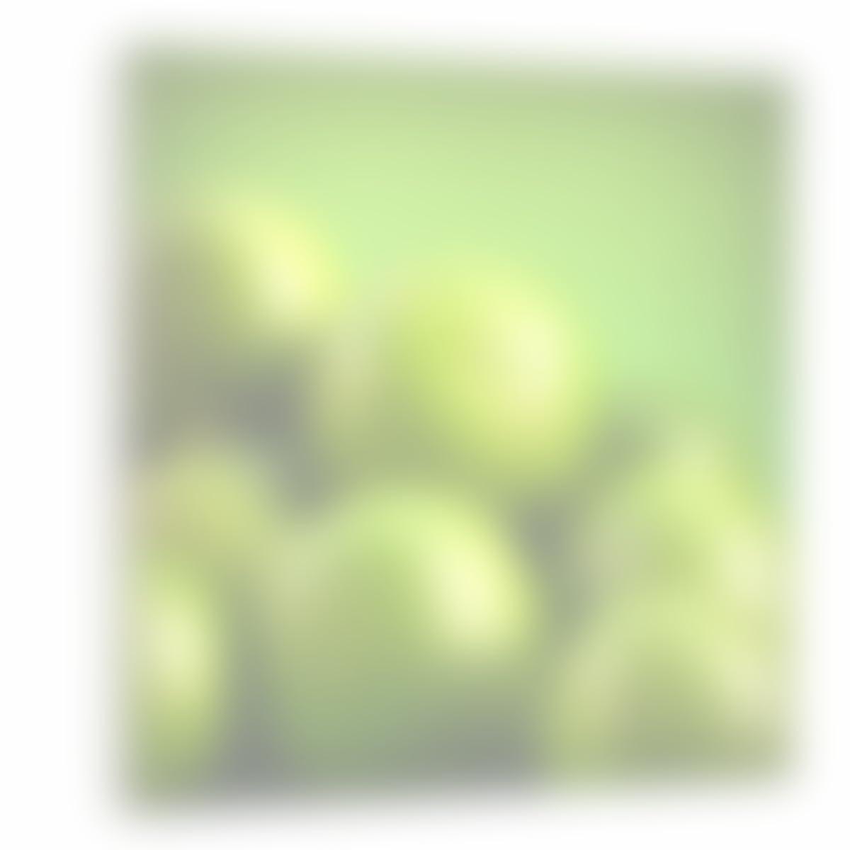 Amazon.com: Westlake Art - Canvas Print Wall Art - Lemon Lime on ...