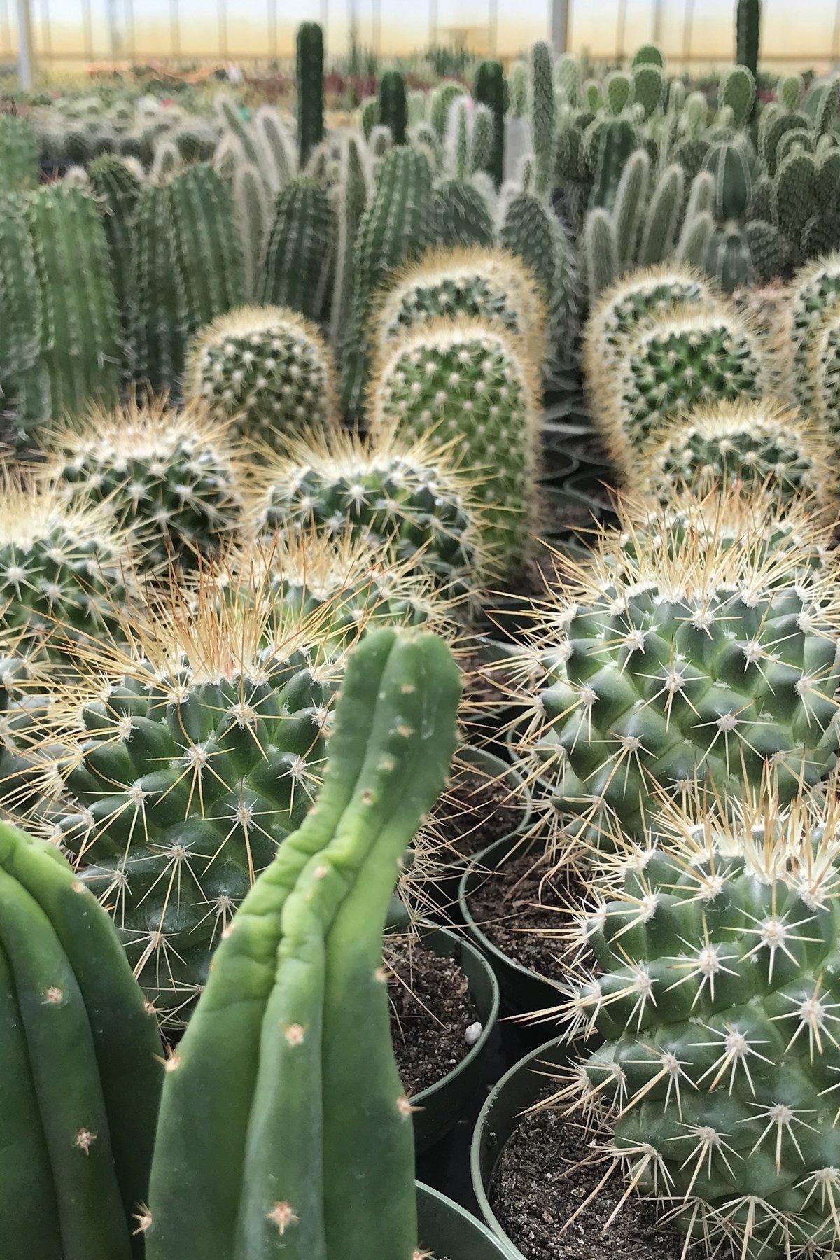 Cactus Assortment (Grower's Select)