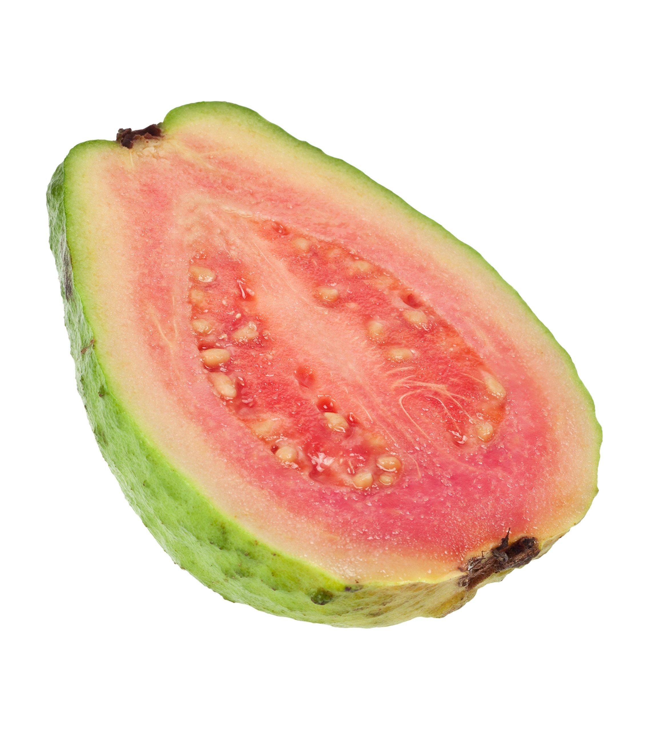 Tikal Guava Psidium guajava LIVE PLANT