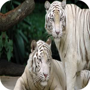Amazon Com Tiger 4k Wallpaper Appstore For Android