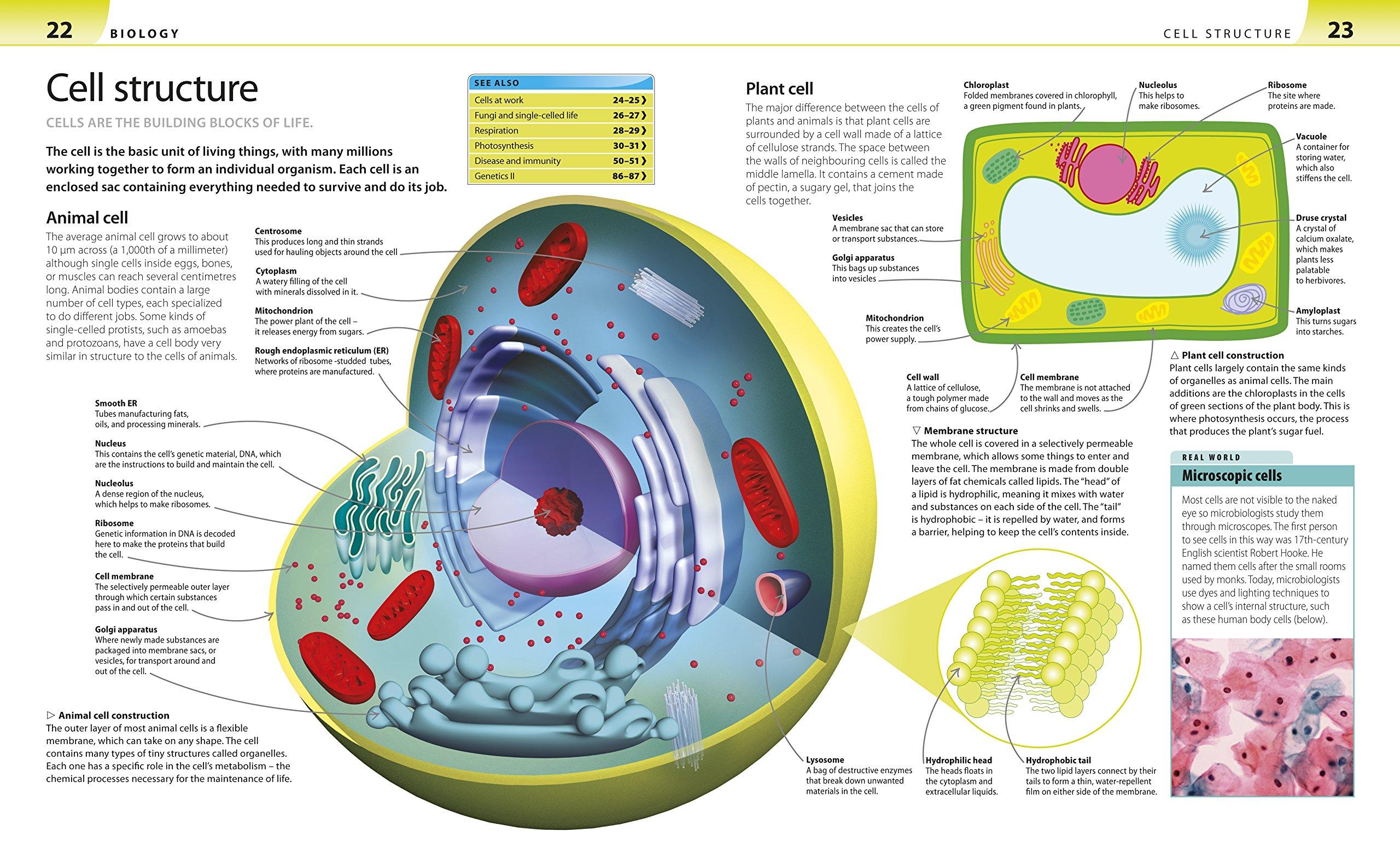 Cells homework help