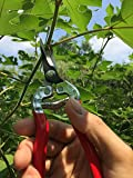 gonicc Professional Micro-Tip Pruning Snip