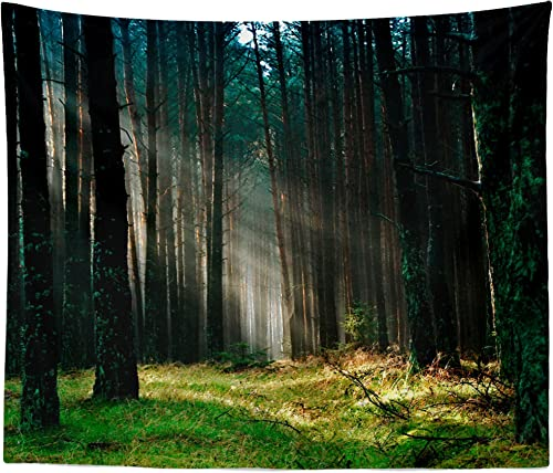 westlake art – Wall Hanging Tapestry – Forest Woodland – Photography Home Decor Living Room – 51x60in