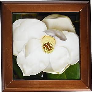 3dRose ft_53630_1 A Garden Magnolia Flower-Framed Tile Artwork, 8 by 8-Inch