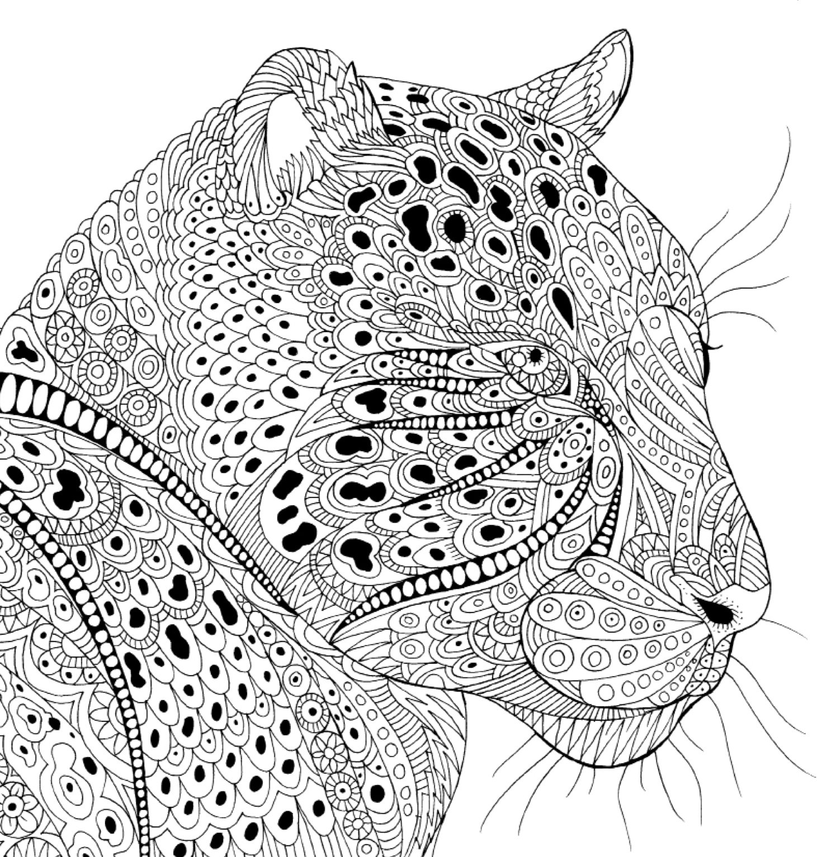 美しい模様の動物塗り絵 大人の塗り絵シリーズ Claire Scully
