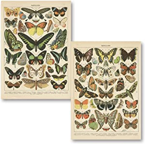 Gango Home Décor Popular Vintage French Types of Papillons Butterflies Set; Two 11x14in Paper Print Posters