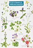 Guide to flowers of walks and waysides 2017 (FSC Fold-out charts)