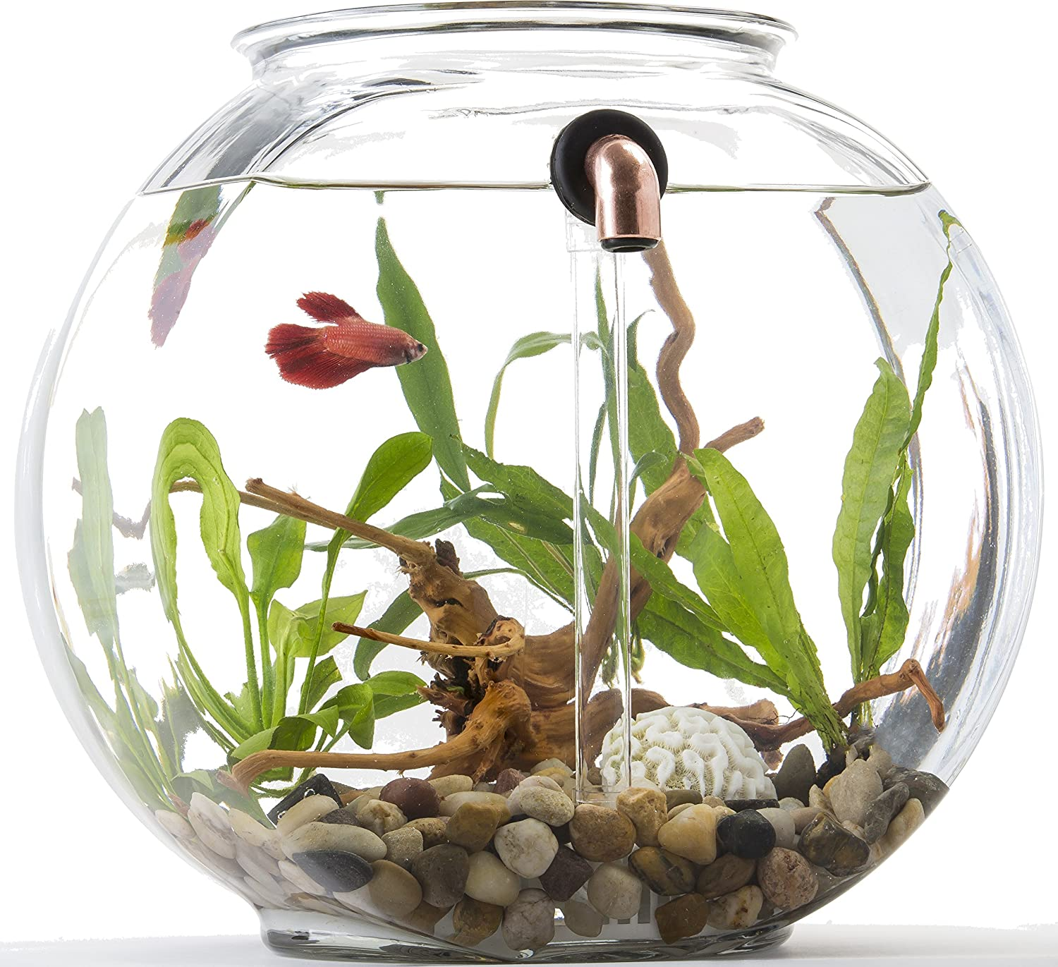Glass fish bowl amazon conjoined 2ball vase clear glass for Fish bowl amazon