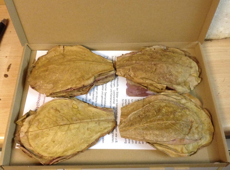 100 g Nano (env. 10 cm/env. 100stück) seemandel feuilles original a coton de marque de Catappa Leaves + + + LIVRAISON Flash + + + seemandel de feuillus terminalia Catappa Leaves catappa-leaves