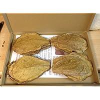 100 Gramm NANO (ca.10cm/ca.100Stück) Seemandelbaumblätter original A-Markenware von catappa-leaves +++BLITZVERSAND+++ Seemandellaub Terminalia Catappa Leaves