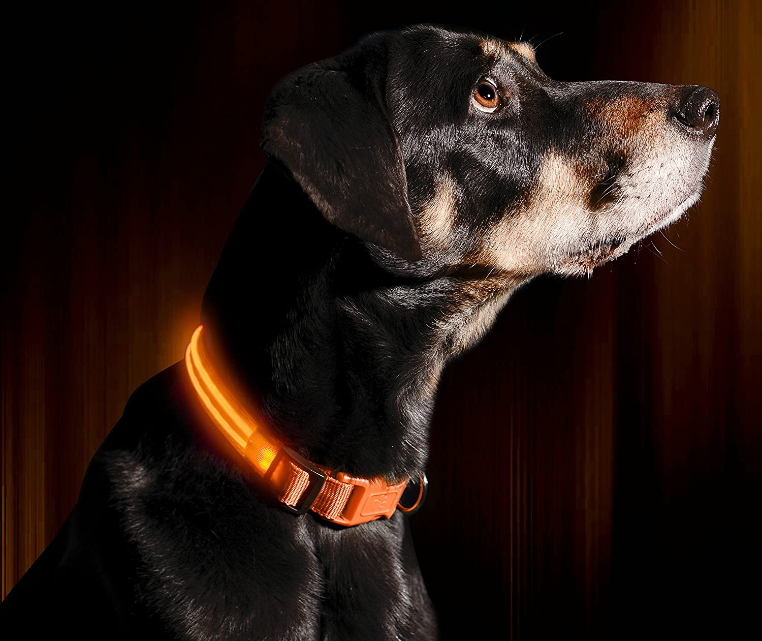 """Green Large Makes Your Dog Visible Illumiseen LED Dog Collar 19 /– 24/"""" // 49 /– 61cm USB Rechargeable Available in 6 Colours /& 6 Sizes Safe /& Seen"""