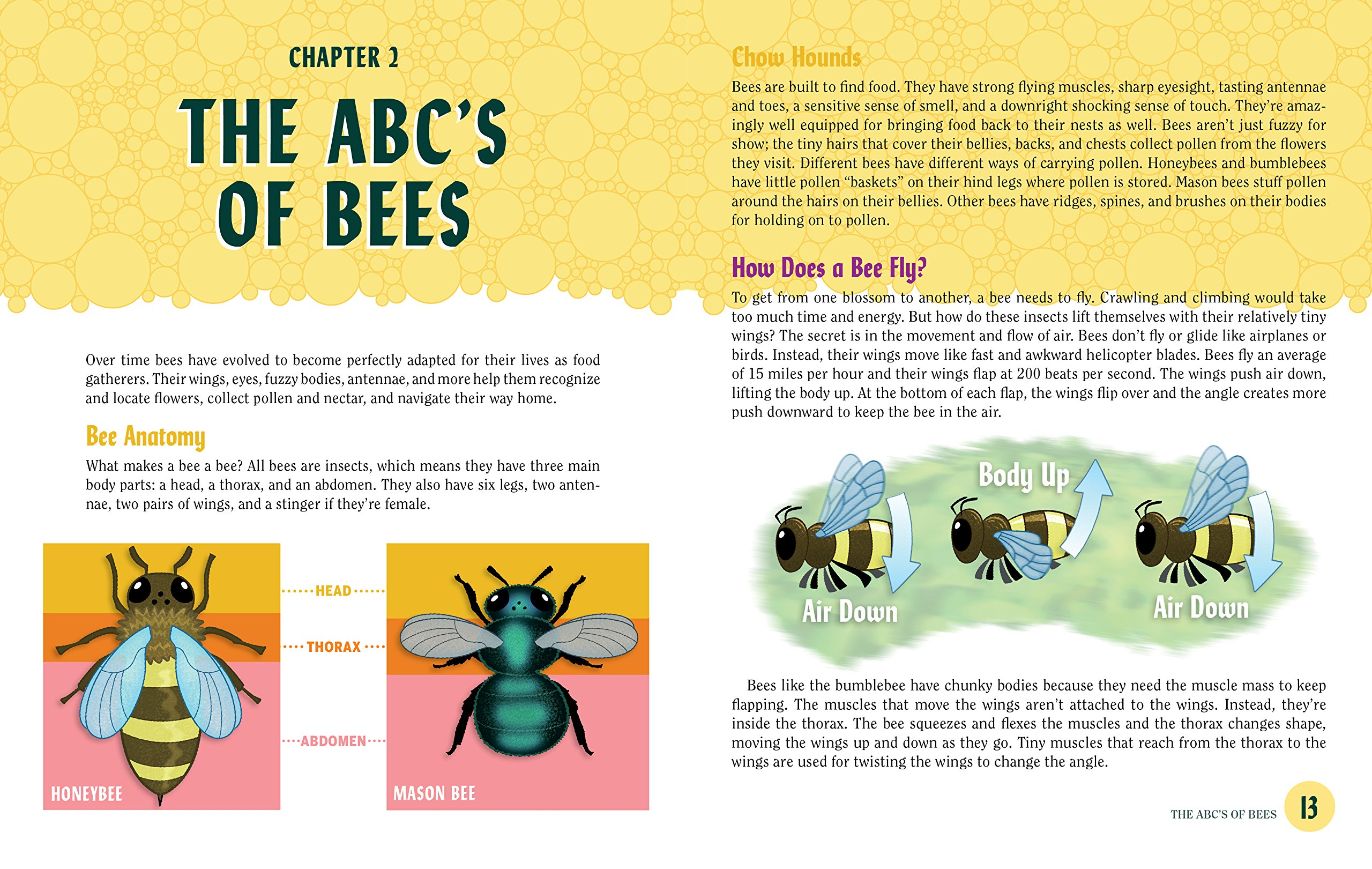 Turn This Book Into a Beehive!: And 19 Other Experiments and ...